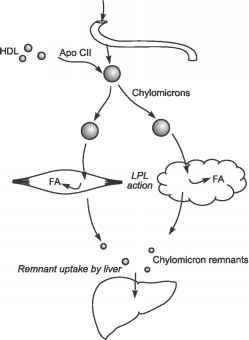 Chylomicrons Pathway