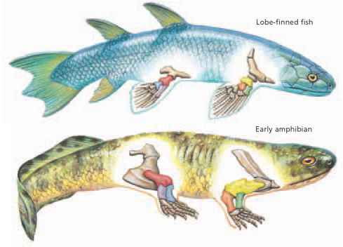 Adaptation to land critical thinking alpf medical research for Bony fish characteristics
