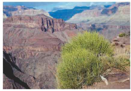 Seedless Vascular Plants - Critical Thinking - ALPF