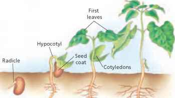 Types Of Roots - Critical Thinking - ALPF Medical Research