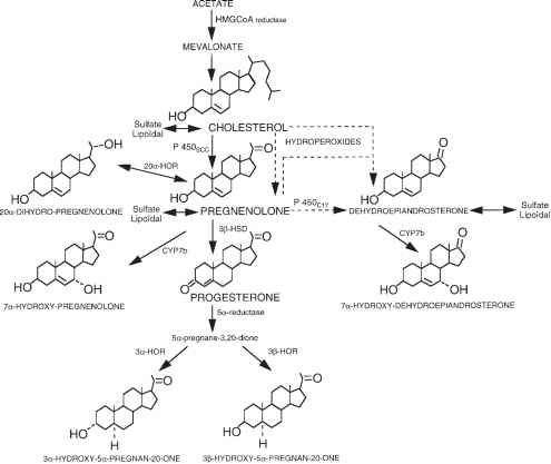 metabolic practical considerations microbial electrosynthesis