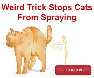 Easy Ways to Control Territorial Cat Spraying
