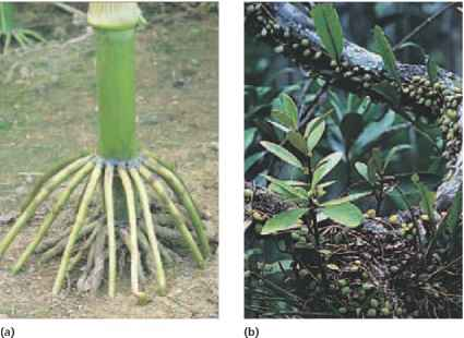 Picture Prop Root System