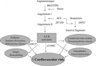 Interleukin And Myocardial Infarction