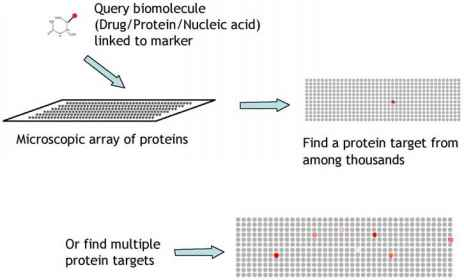 Target Protein Array