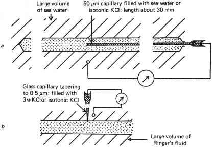 Electrophysiological Recording Methods Membrane Potential