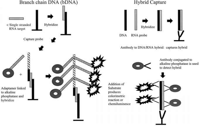Dna Signal Amplification