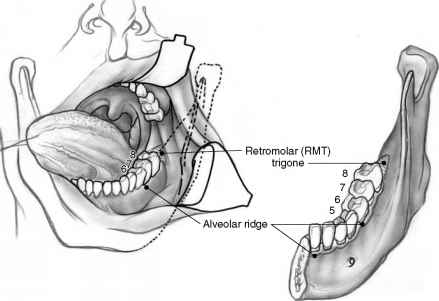 Importance Of Structure And Function - Oral Cavity