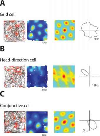 Headdirection cells and conjunctive cells - Remote Memory